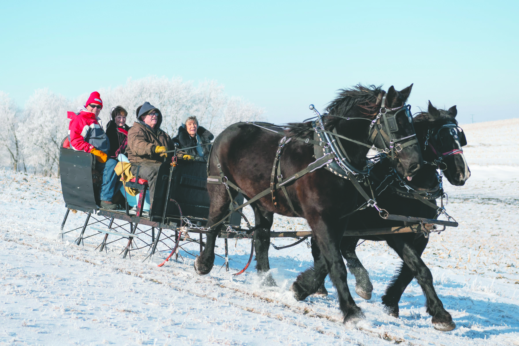 Mike and Kathy Knudtson, Lake Mills, hired sleigh and horses from Eugene Jacobson, Kiester, Minn., and took family and friends on a sleigh ride Saturday afternoon. This is the second year the Knudtsons have enjoyed a sleigh ride for their family Christmas party. Afterwards, they enjoyed lunch in their heated garage.